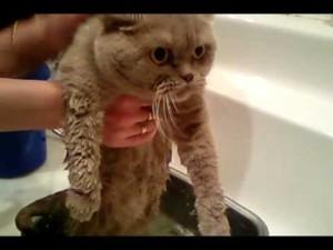 как часто можно мыть кота