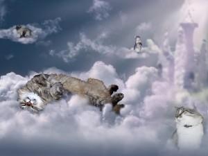 почему коты уходят умирать