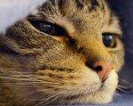 почему коты уходят умирать из дома