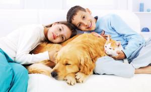 какое домашние животное лучше завести +в квартире