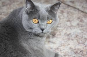 сколько живут коты +в домашних условиях