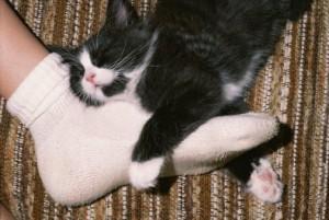 почему коты спят в ногах.