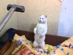 почему коты боятся пылесоса