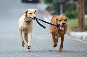 подработка выгул собак за деньги