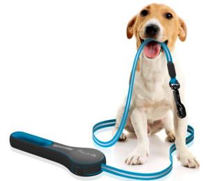 как правильно выгуливать собаку