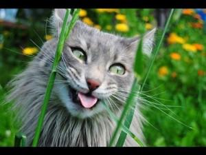 как прикольно назвать кота