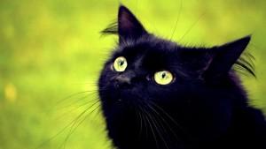 как назвать черного кота