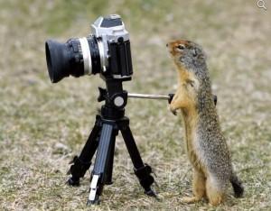 можно ли заработать +на фотографиях;