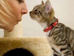 как воспитать кота