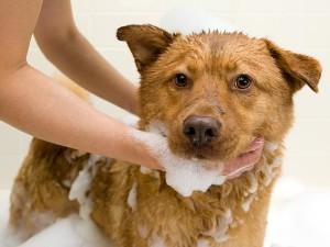 почему собака воняет псиной