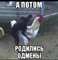 шутки про петухов и собак