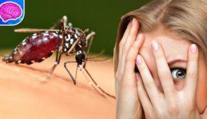 кусают комары