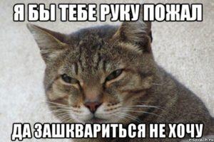 kot_62865227_orig_-300x200.jpeg